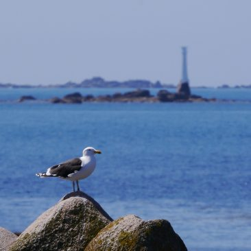 Seagull and Bishop Rock Lighthouse